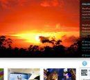 Curiumite Free WordPress Theme