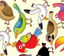Colorful Funny Birds Vector